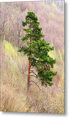 Metal Print featuring the photograph Lone Pine by Les Palenik
