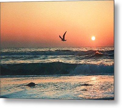 Lone Seagull Sunset Flight Metal Print