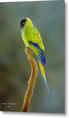 Lone Star - Nanday Conure Metal Print by Frances McMahon