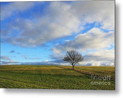 Lone Tree At Epsom Downs Uk Metal Print