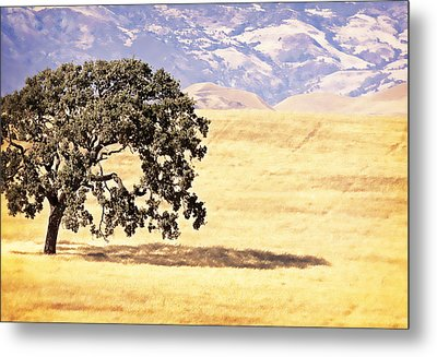 Lone Tree Metal Print by Caitlyn  Grasso