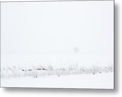 Lone Tree In Snow Metal Print by Mary Bedy