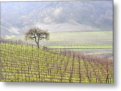 Lone Tree In The Vineyard Metal Print by AJ  Schibig