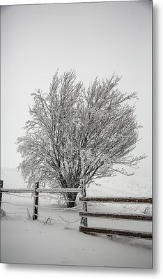 Lone Tree Metal Print by John Haldane
