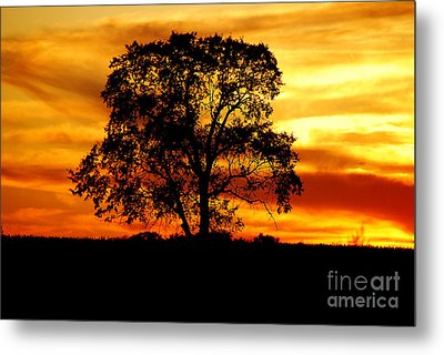 Metal Print featuring the photograph Lone Tree by Mary Carol Story