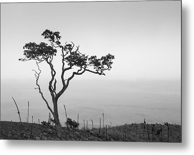 Lone Tree Metal Print by Takeshi Okada