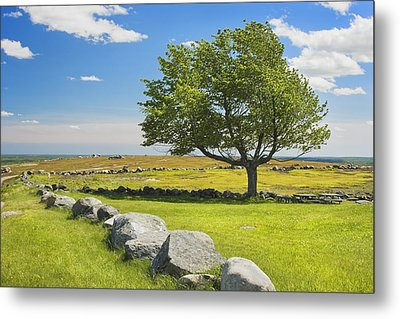 Lone Tree With Blue Sky In Blueberry Field Maine Metal Print by Keith Webber Jr