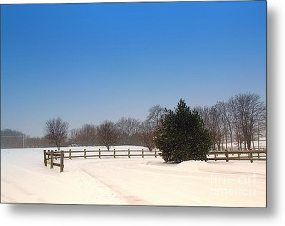 Lone Winter Evergreen  Metal Print