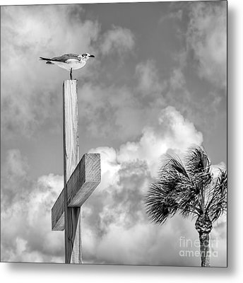 Lonely At The Top Metal Print by Lynn Palmer