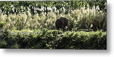 Lonely Bull Metal Print by Steve Smith