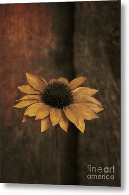 Metal Print featuring the photograph Lonely Coneflower by Marjorie Imbeau