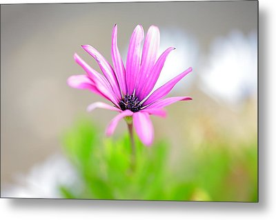 Lonely Cosmos Metal Print