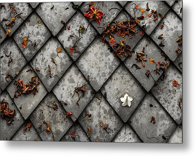 Metal Print featuring the photograph Lonely Flower by Justin Albrecht