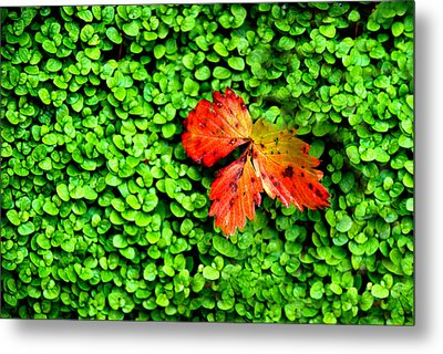 Metal Print featuring the photograph Lonely Leaf by Charlie and Norma Brock