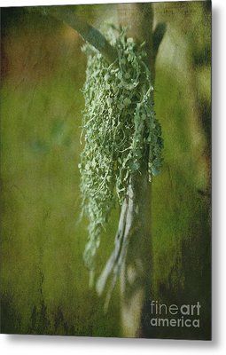 Lonely Lichen Metal Print by Judi Bagwell