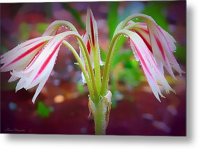 Lonely Lilly Metal Print by Debra Forand
