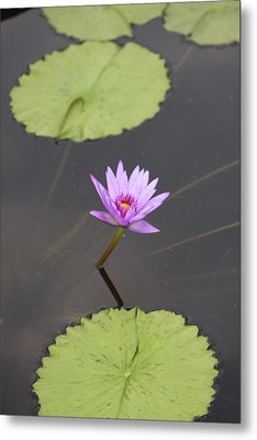 Lonely Lily Metal Print by Vadim Levin