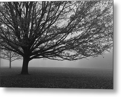 Metal Print featuring the photograph Lonely Low Tree by Maj Seda