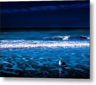 Metal Print featuring the photograph Lonely Seagull by Randy Sylvia