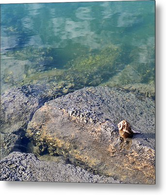 Lonely Shell Metal Print by Patricia Greer
