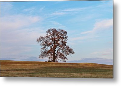 Lonely Tree Metal Print by Cynthia Guinn
