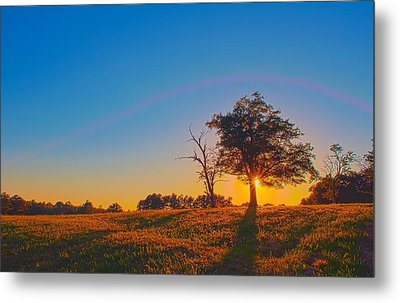 Metal Print featuring the photograph Lonely Tree On Farmland At Sunset by Alex Grichenko