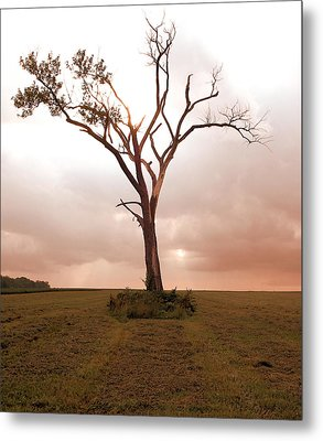Metal Print featuring the photograph Lonely Tree by Ricky L Jones