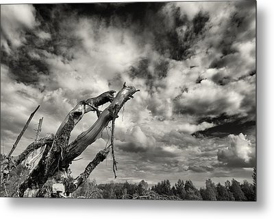 Lonely Tree Roots Reaching For The Sky Metal Print by Christian Lagereek