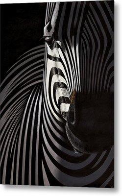 Lonely   Zebra Metal Print by Raphael  Sanzio