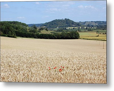 Lonesome Poppies Metal Print