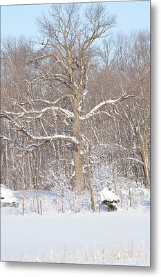 Metal Print featuring the photograph Loney Ash by Dacia Doroff