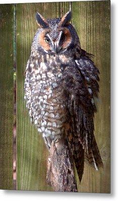 Metal Print featuring the photograph Long Eared Owl by Joseph Skompski