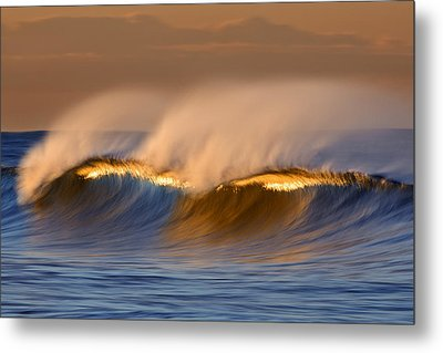 Metal Print featuring the photograph Long Golden Crest  Mg_1721 by David Orias