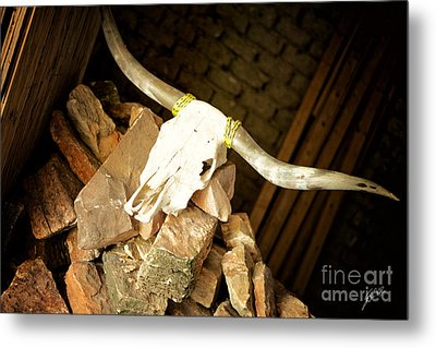 Metal Print featuring the photograph Longhorn by Erika Weber