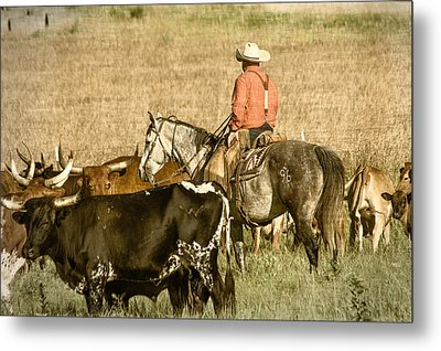 Metal Print featuring the photograph Longhorn Round Up by Steven Bateson
