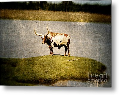 Longhorn Metal Print by Scott Pellegrin