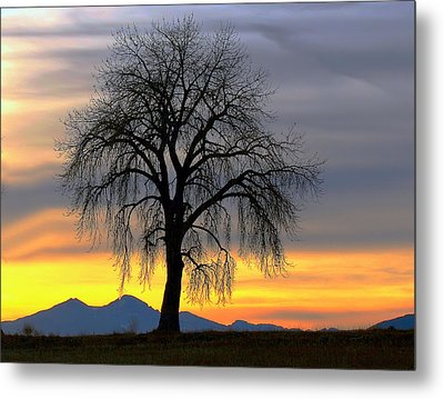 Longs Peak Sunset Metal Print by Rebecca Adams