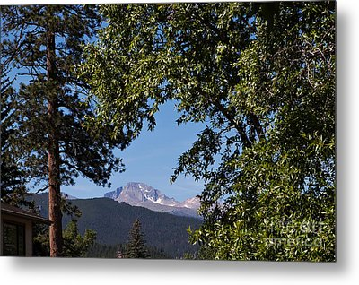 Longs Peak Through The Trees Metal Print by Kay Pickens