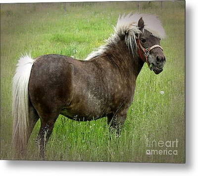 Look At My Hair Metal Print by Gena Weiser