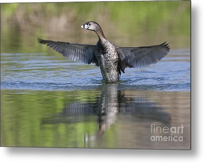 Look At My Wings Metal Print by Ruth Jolly