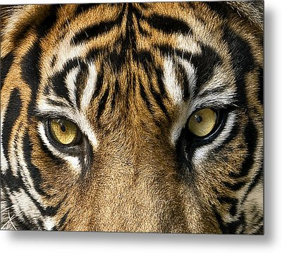Look Into My Eyes Metal Print by Gary Neiss