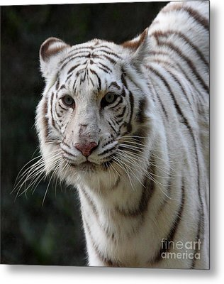 Look Into My Eyes  Metal Print by Ruth Jolly