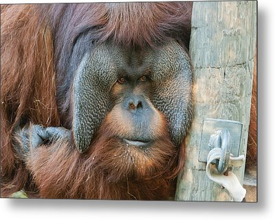 Metal Print featuring the photograph Look Into My Eyes by Tim Stanley
