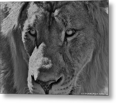 Metal Print featuring the photograph Look Of Concern by Elaine Malott