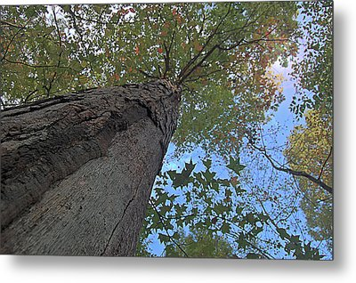 Metal Print featuring the photograph Look Up by Michael Donahue