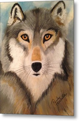 Looking At A Timber Wolf Metal Print