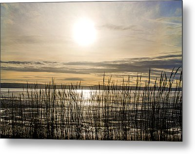 Looking At Wales Through The Grass Metal Print