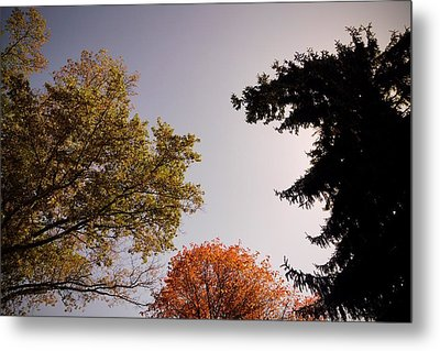 Looking Down On Us Metal Print by Photographic Arts And Design Studio