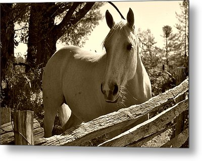 Metal Print featuring the photograph Looking For A Handout by Kelly Nowak