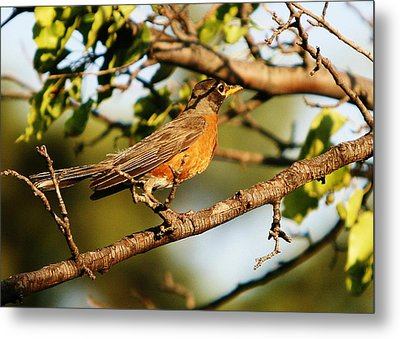 Metal Print featuring the photograph Looking For Spring by Shirley Heier